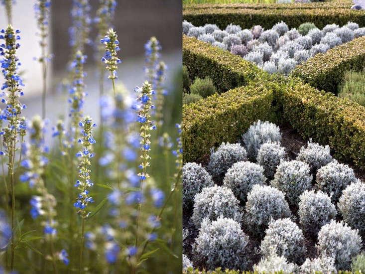 spray-farm-australia-gardenista-5