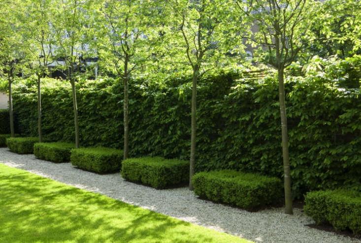 st-johns-wood-trees-del-buono-gazerwitz-gardenista