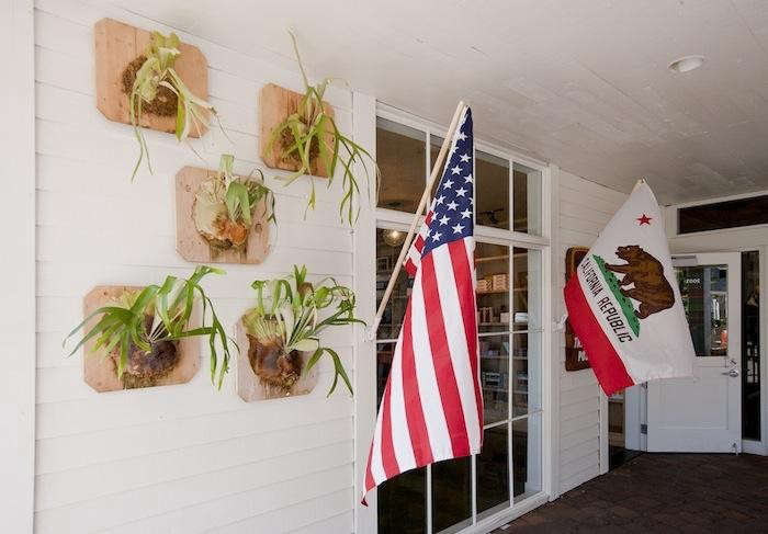 staghorn fern post office flag