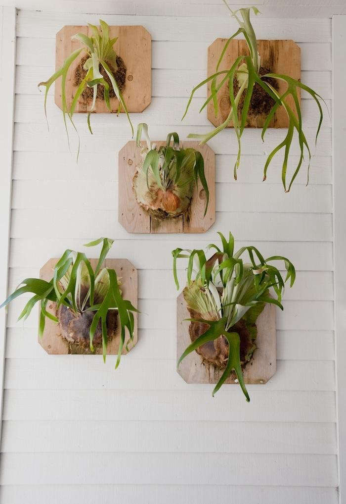 staghorn fern post office