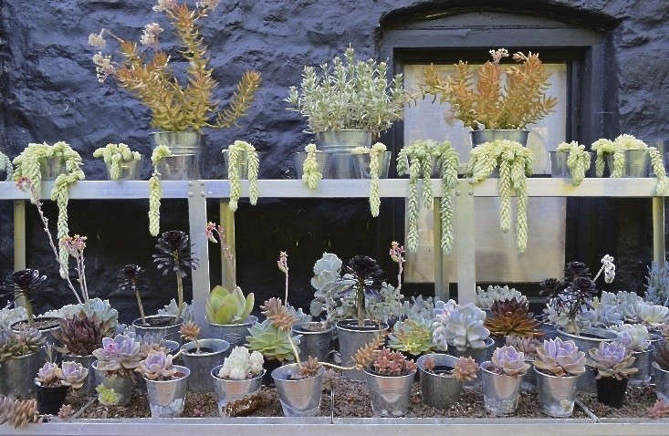 steal-this-look-succulent-shelves-3-gardenista