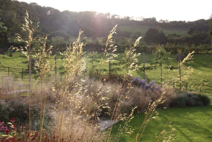 stipa-gigantea-garden-design-landscape-gardenista