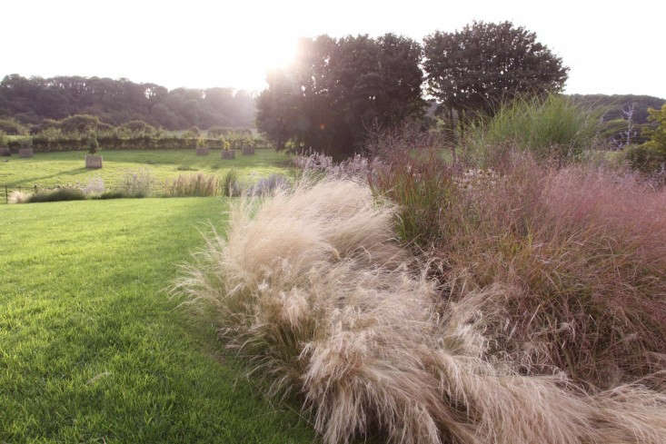Gossamer gardens 12 ideas for landscaping with mexican for Border grasses for landscaping