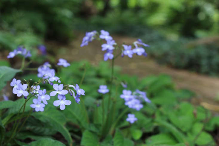 streptocarpus-Cellars-Hohenort-Marie-Viljoen-Gardenista