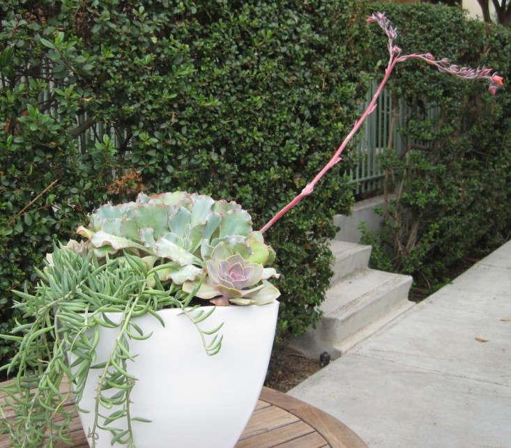 Diy outdoor planter tough beauties that wont die even if you diy outdoor planter tough beauties that wont die even if you forget to water gardenista workwithnaturefo