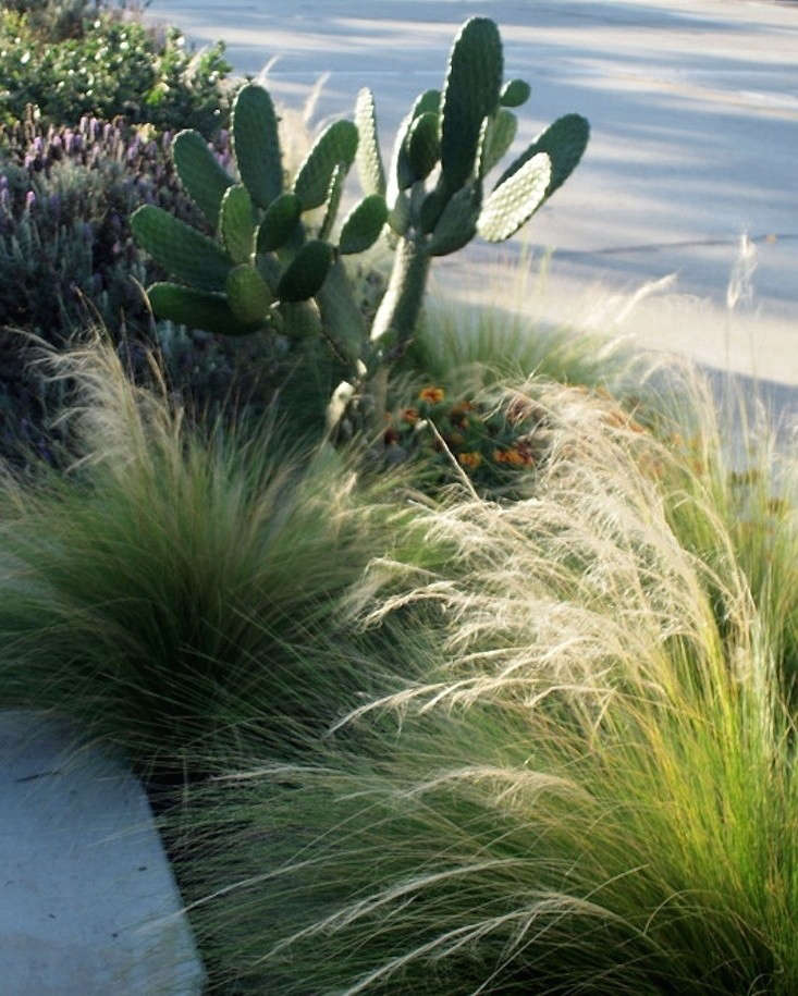 Garden Decor Los Angeles: Table Of Contents: Drought Week: Gardenista