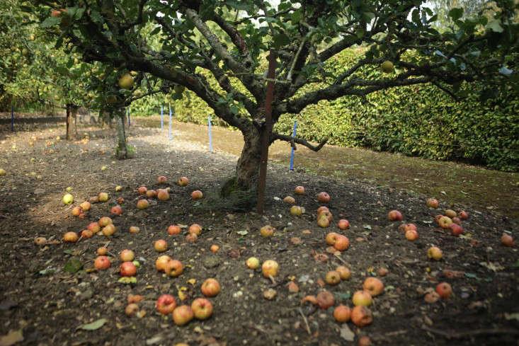 sulby-apple-ground