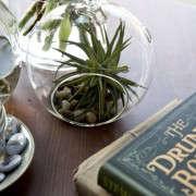 sycamore-cafe-11-nicole-franzen-gardenista