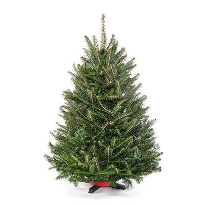 tableto-christmas-tree-fraser-fir-1-gardenista