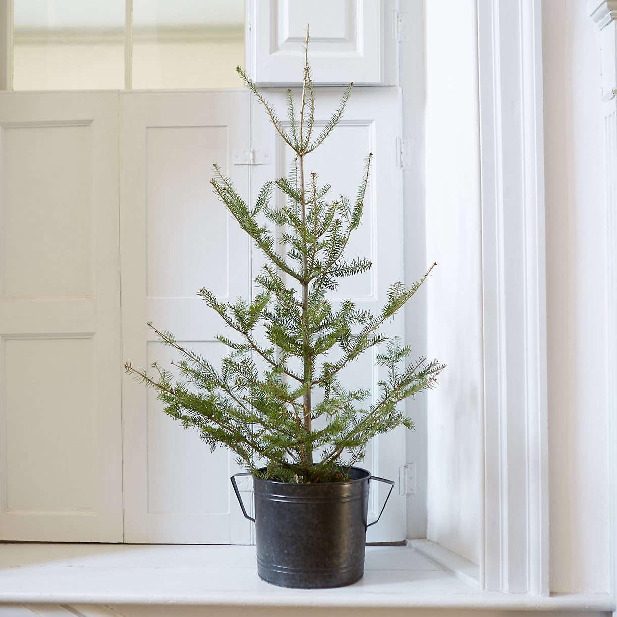 tabletop-balsam-fir-christmas-tree-terran-gardenista