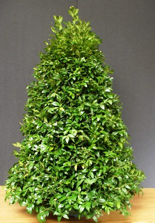 Above: Standing 20 Inches Tall, A Miniature Boxwood Tree Topiary Is $87.95  From Gardens Of The Blue Ridge.