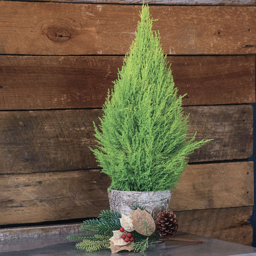 Small Christmas Tree In Pot
