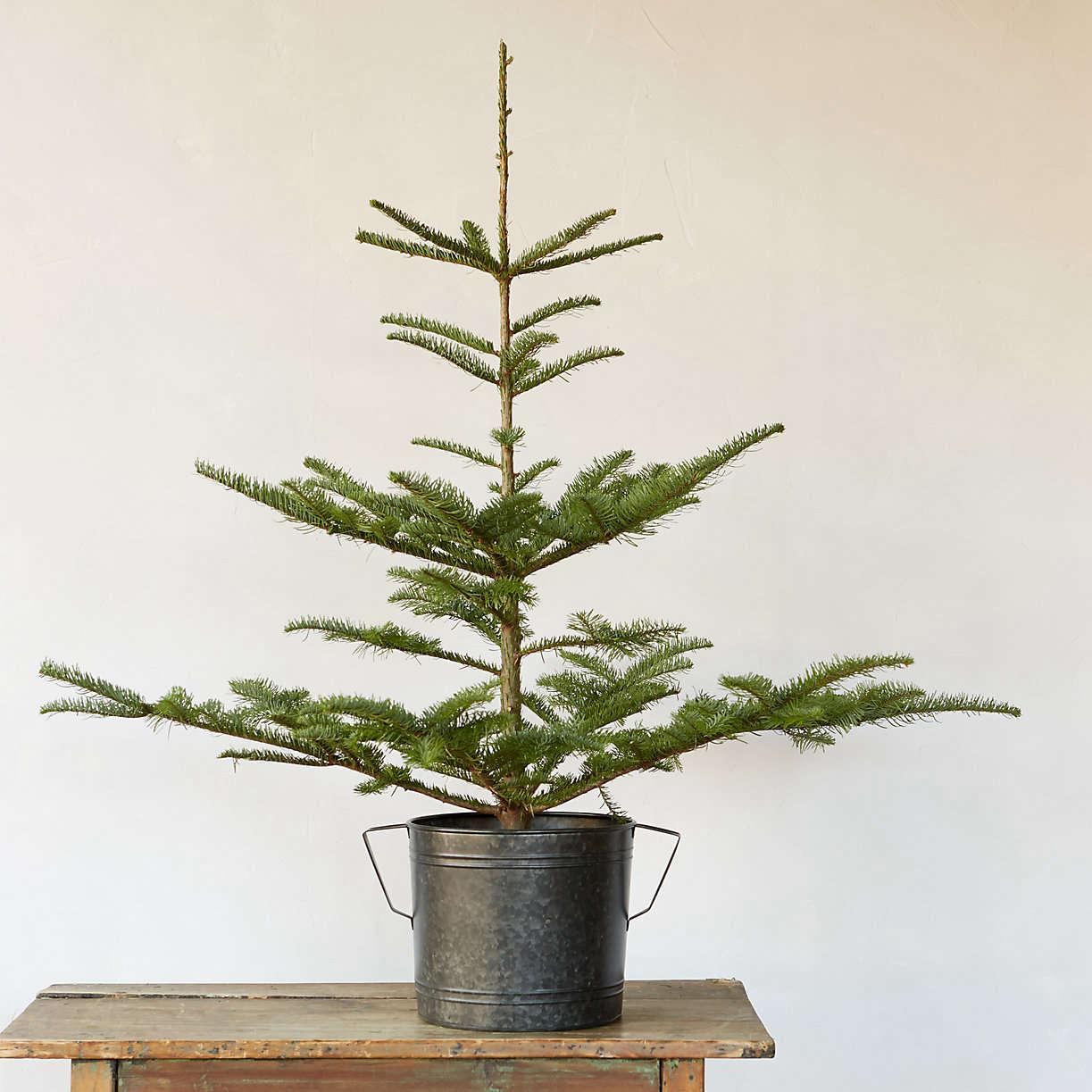 tabletop-noble-fir-christmas-tree-terrain-gardenista