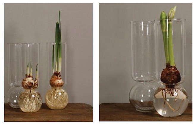 tall-bulb-vases-Gardenista