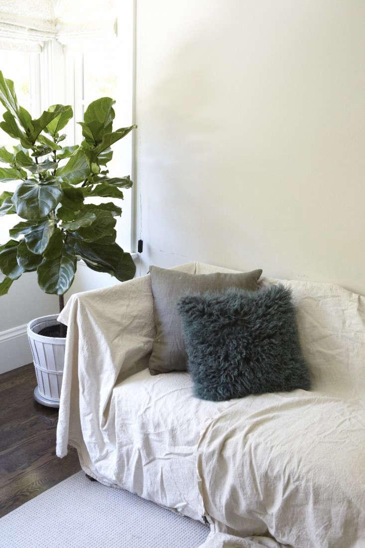 teen-bedroom-fiddle-leaf-fig-gardenista
