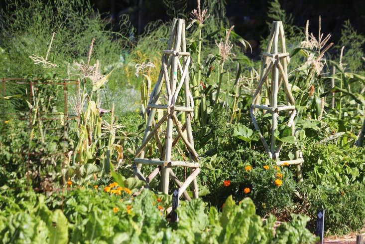 teepees-oranjezicht-city-farm-gardenista