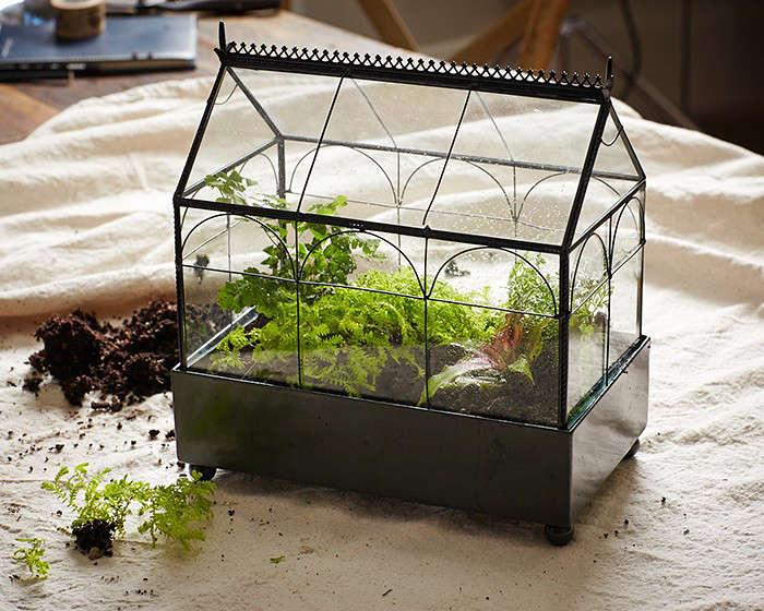 terrarium gardening 101 8 l Gardenista - Gardening 101: How To Make A Closed Terrarium - Gardenista