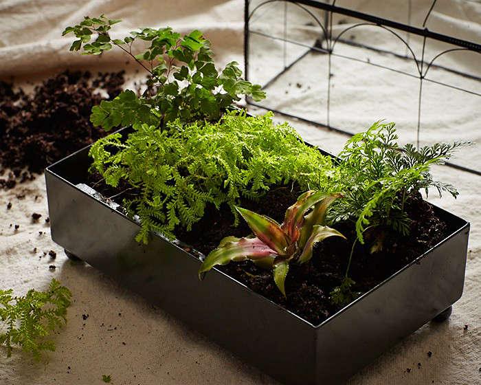 terrarium gardening 101 l Gardenista - Gardening 101: How To Make A Closed Terrarium - Gardenista