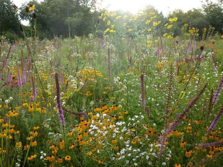 9 Garden Ideas To Steal From England 39 S Tom Stuart Smith Gardenista
