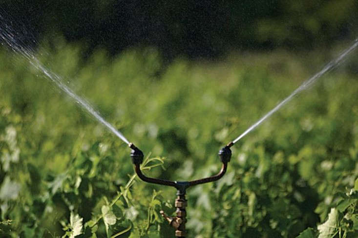 tradewinds-brass-sprinkler