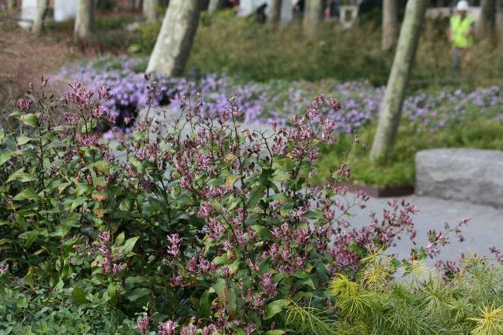 tricyrtis-marie-viljoen-gardenista