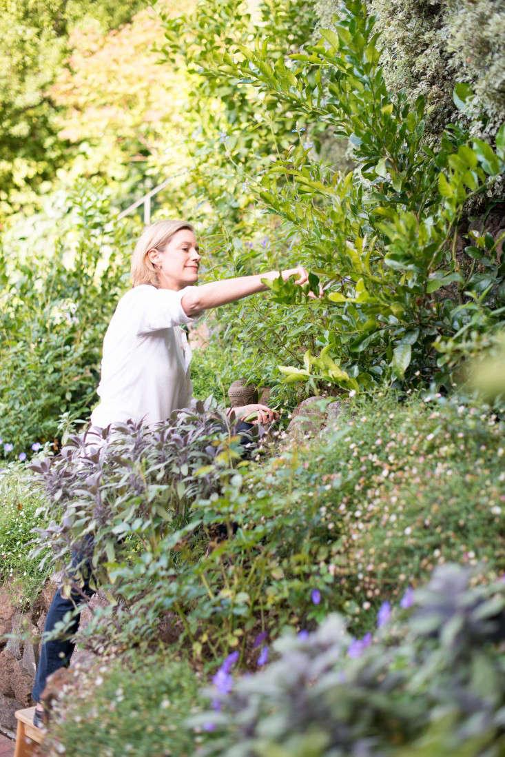 true-nature-botanicals-hillary-robertson-garden-mill-valley-natural-beauty-gardenista