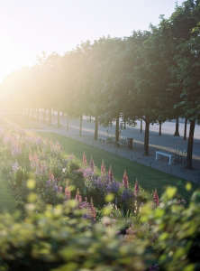 flower beds and allee at tuileries in june by alice gao; Gardenista