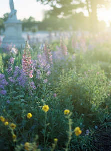 tuileries flowers in bloom at twilight by alice gao; Gardenista