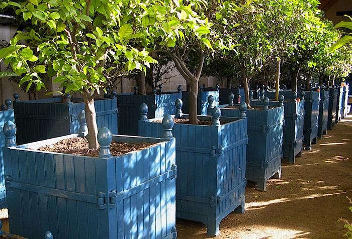 tuileries-planter-boxes-oranges