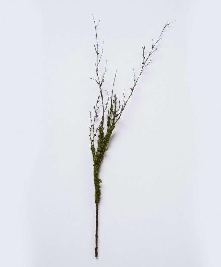 twig-moss-branch-gardenista