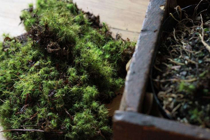 use moss to cover plastic pot