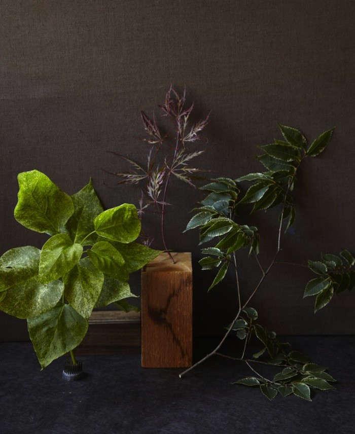 variegated-plants-2-maria-robledo-gardenista