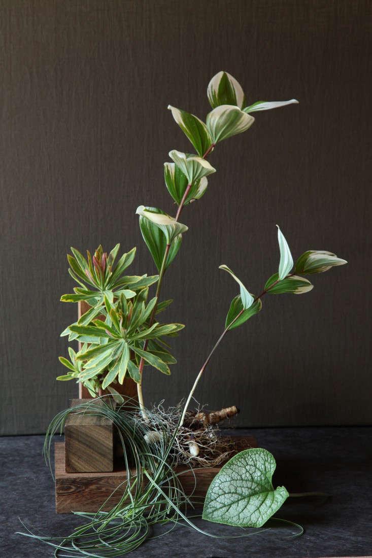 variegated-plants-6-maria-robledo-gardenista