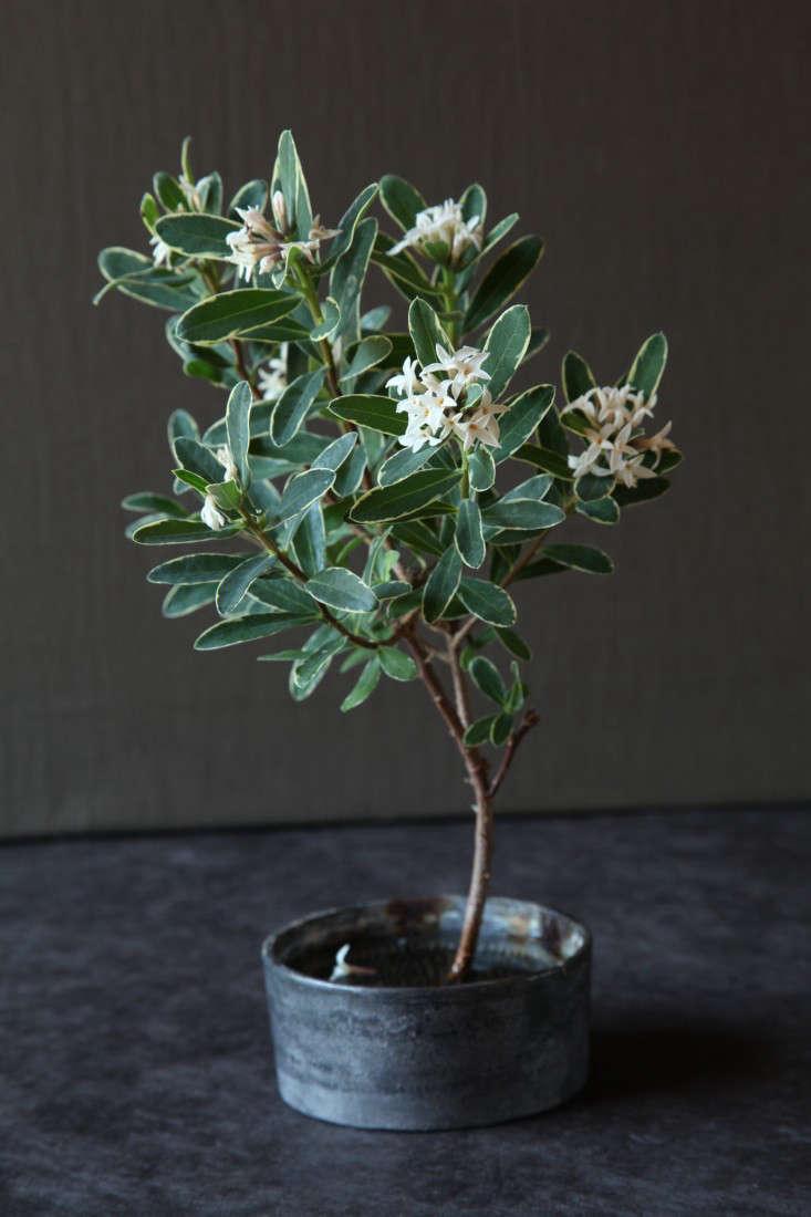 variegated-plants-8-maria-robledo-gardenista