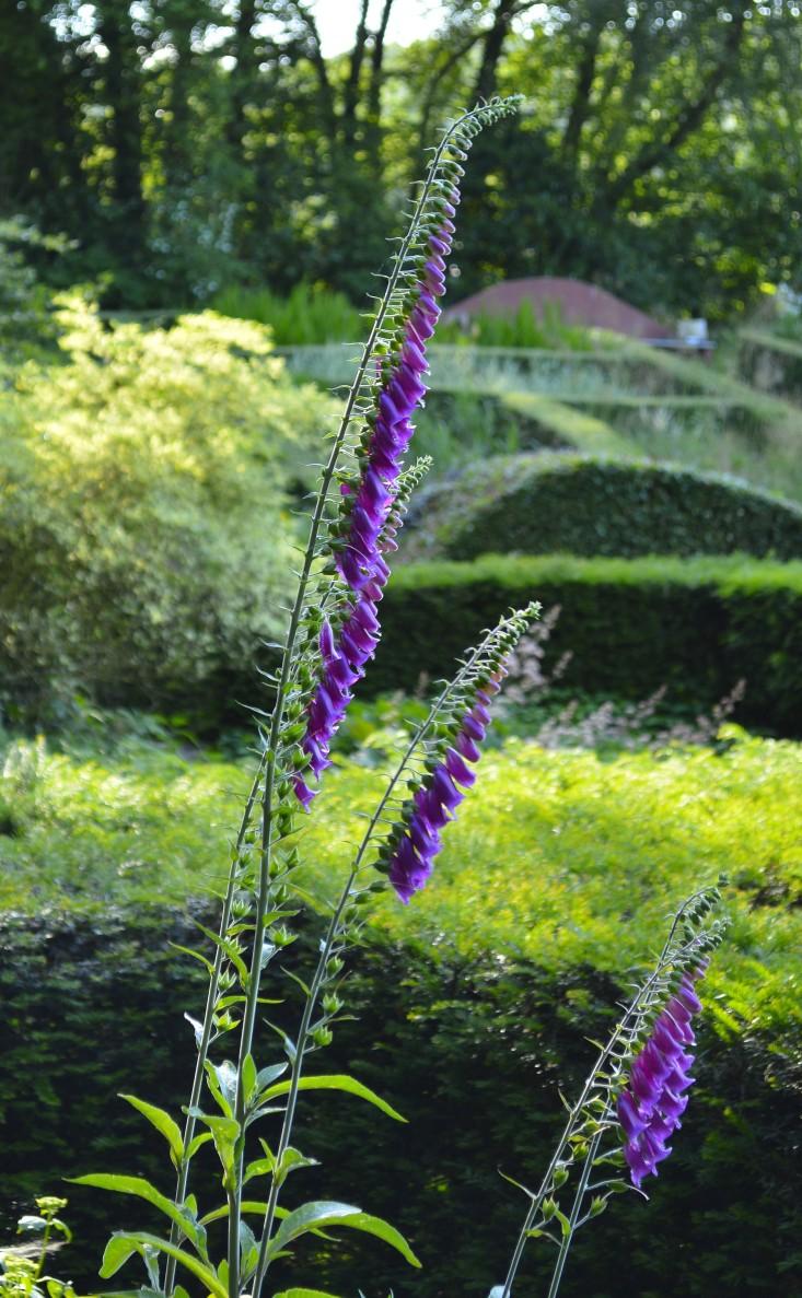 veddw-wales6-foxglove-gardenista