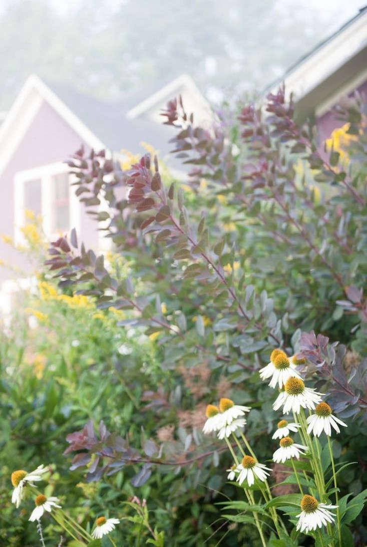 vermont-garden-smoke-bush-perennials-gardenista