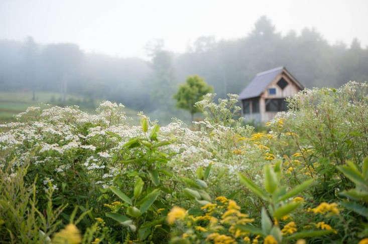 vermont-garden-wetland-plants-gardenista