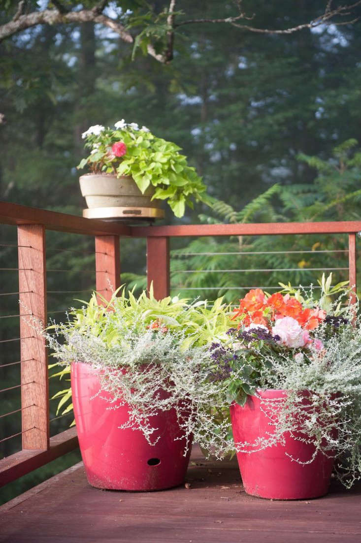 garden designer visit: a burst of color in the green mountains