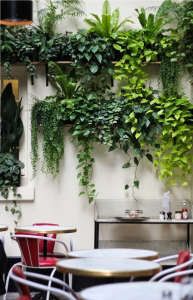 Vertical garden plant wall Hotel Amour Paris ; Gardenista
