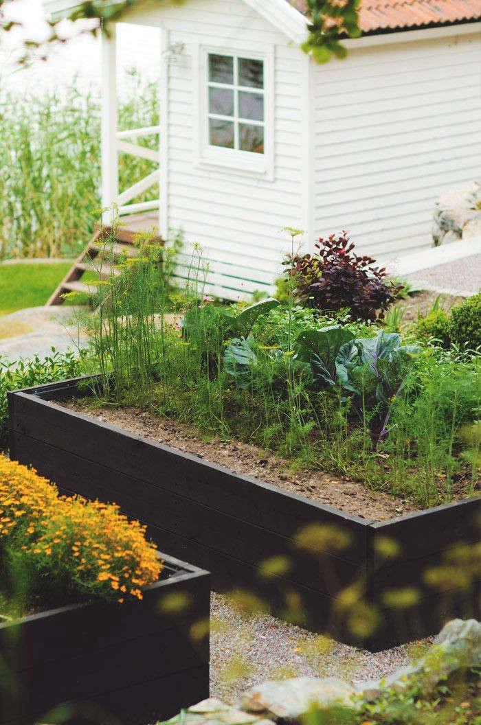 Raised Bed Garden Design: Trend Alert: Black-Stained Raised Beds: Gardenista