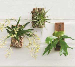 wall-mount-staghorn-fern-tillandsia-orchid-gardenista
