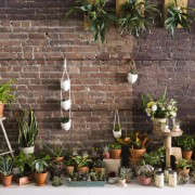 wall_of_plants_spina_cafe_nicole_franzen_gardenista