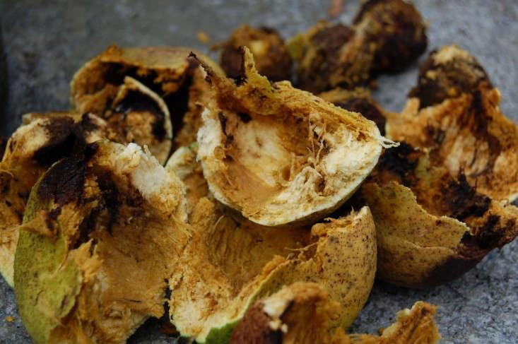 walnuts-smashed-liane-tyrell-gardenista
