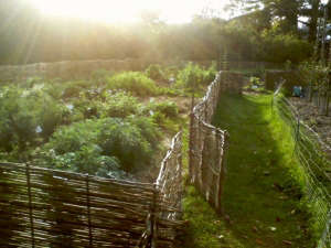 Woven wattle fencing landscaping garden design ; Gardenista