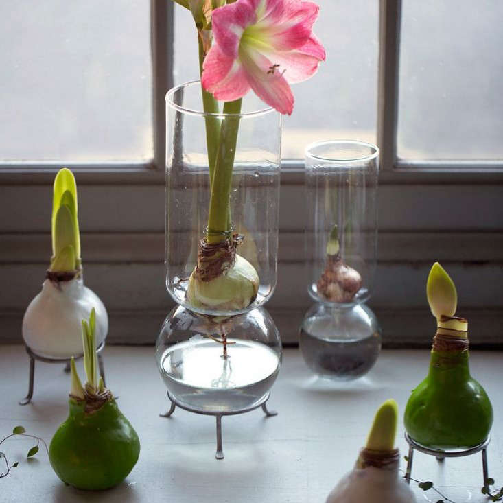 waxed bulbs and footed stand in gardenista gift guide