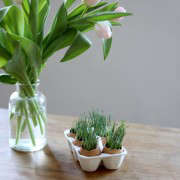 wheat-grass-eggs-14-erin-boyle-gardenista