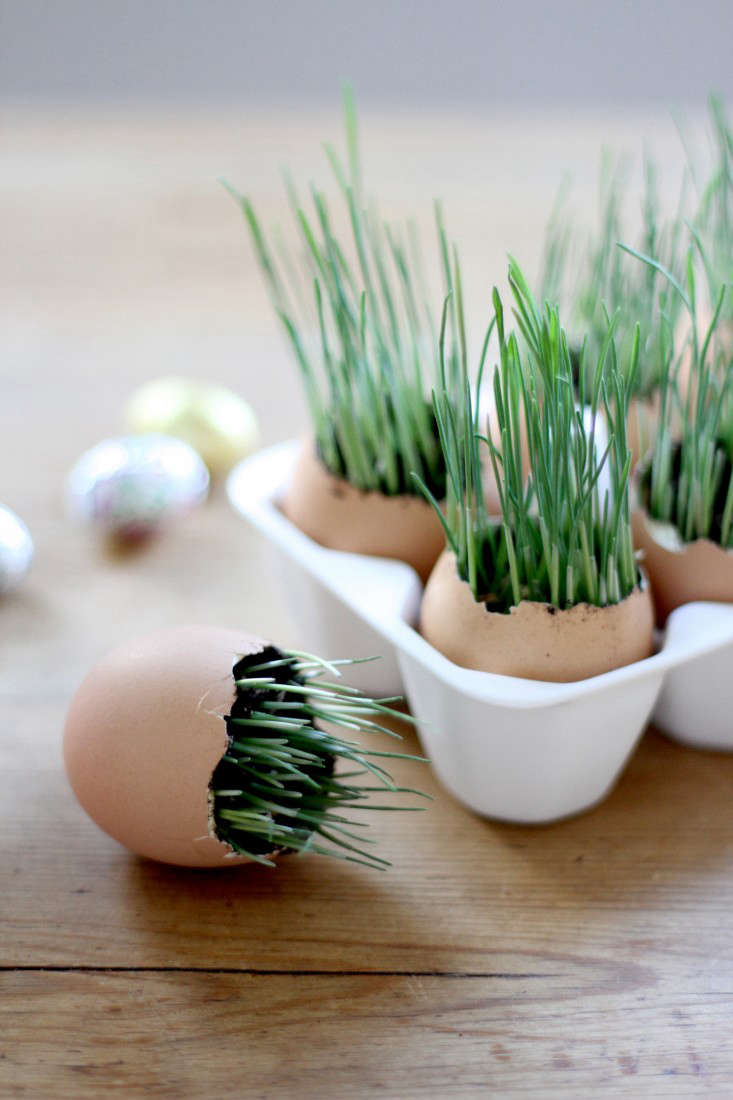 wheat-grass-eggs-4-erin-boyle-gardenista