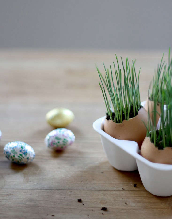 wheat-grass-eggs-6-erin-boyle-gardenista
