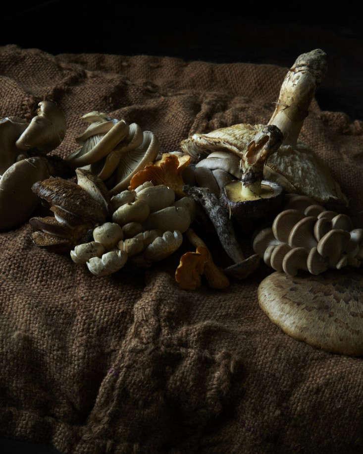 wild-mushrooms-and-burlap-andrea-gentl