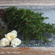 winter romance, false cypress and David Austen roses